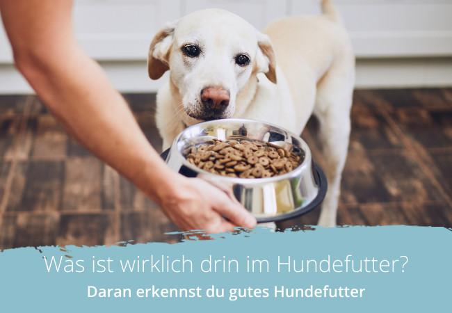 Hochwertiges Hundefutter